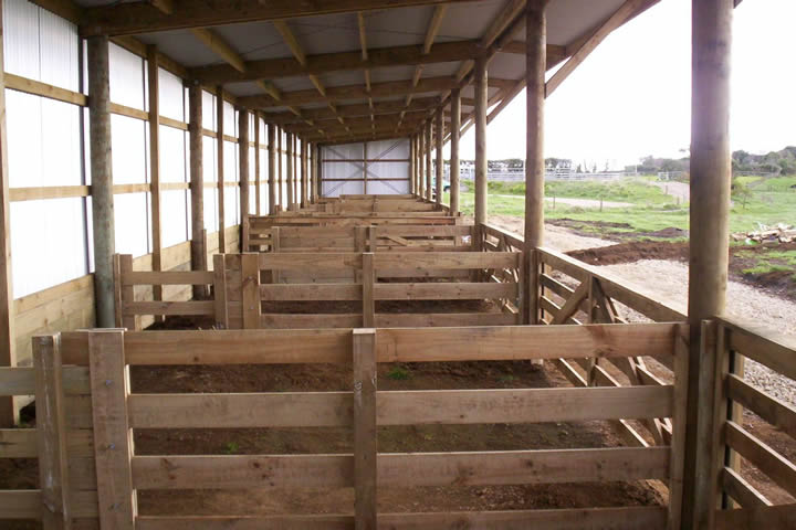 Leanto calving shed